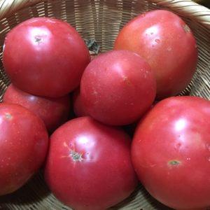 じゅくじゅくトマト